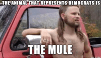 THE ANIMAL THAT REPRESENTS DEMOCRATSIS  THE MULE  made on imgur Almost politically correct redneck