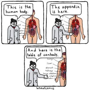The Human Body [OC]: The appendix  is here  This is the  hunan bady  er  ver  ech  mach  O stine  estine  ne  And here is the  table of contents  Tungs  liver  stomach  Kidneys  large intestine  intestine  appendix  Wheatcomics The Human Body [OC]