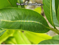 laughoutloud-club:  I Can Barely See It: The artof camouflage,  .. laughoutloud-club:  I Can Barely See It