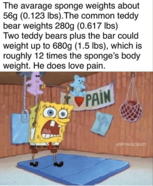 srsfunny:  Get dem gains: The avarage sponge weights about  56g (0.123 lbs).The common teddy  bear weights 280g (0.617 lbs)  Two teddy bears plus the bar could  weight up to 680g (1.5 lbs), which is  roughly 12 times the sponge's body  weight. He does love pain.  PAIN  SPONGECRUST srsfunny:  Get dem gains