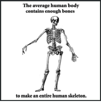 Bones, Memes, and 🤖: The average human body  contains enough bones  to make an entire human skeleton, WHAT badsciencejokes
