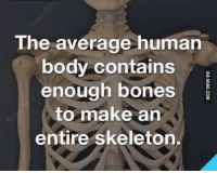 Bones, Memes, and 🤖: The average human  body contains  enough bones  to make an  entire skeleton. There's no bones about it, this is humerus.