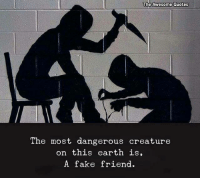 Fake, Earth, and Quotes: The Awesome Quotes  The most dangerous creature  on this earth is  A fake friend.
