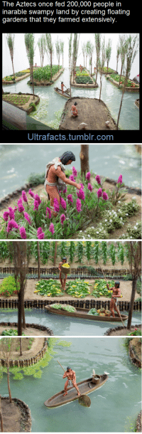 "Bailey Jay, Facts, and Food: The Aztecs once fed 200,000 people in  inarable swampy land by creating floating  gardens that they farmed extensively.  Ultrafacts.tumblr.com <p><a href=""http://ultrafactsblog.com/post/115780877016/how-on-earth-would-you-feed-a-city-of-over-200000"" class=""tumblr_blog"">ultrafacts</a>:</p>  <blockquote><p>How on earth would you feed a city of over 200,000 people when the land around you was a swampy lake? Seems like an impossible task, but the Aztec managed it by creating floating gardens known as <b>chinampas</b>, then they farmed them intensively.</p><p>These ingenious creations were built up from the lake bed by piling layers of mud, decaying vegetation and reeds. This was a great way of recycling waste from the capital city Tenochtitlan. Each garden was framed and held together by wooden poles bound by reeds and then anchored to the lake floor with finely pruned willow trees. The Aztecs also dredged mud from the base of the canals which both kept the waterways clear and rejuvenate the nutrient levels in the gardens.</p><p>A variety of crops were grown, most commonly maize or corn, beans, chillies, squash, tomatoes, edible greens such as quelite and amaranth. Colourful flowers were also grown, essential produce for religious festivals and ceremonies. Each plot was systematically planned, the effective use of seedbeds allowed continuous planting and harvesting of crops.<br/></p><p>Between each garden was a canal which enabled canoe transport. Fish and birds populated the water and were an additional source of food. <b><a href=""http://blog.tepapa.govt.nz/2013/09/24/aztecs-gardens-in-the-lake/"">[x]</a></b><br/></p><figure class=""tmblr-full"" data-orig-height=""505"" data-orig-width=""713""><img src=""https://78.media.tumblr.com/923c55147a4b0fc7a72a3641d61cc2ae/tumblr_inline_nmga8naht41rxwfvw_540.gif"" data-orig-height=""505"" data-orig-width=""713""/></figure><p><a href=""http://blog.tepapa.govt.nz/2013/09/24/aztecs-gardens-in-the-lake/"">(Fact Source)</a> For more facts,<b> <a href=""http://ultrafacts.tumblr.com/"">follow</a></b><a href=""http://ultrafacts.tumblr.com/""><b> Ultrafacts</b></a>   <br/></p></blockquote>"