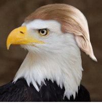 Memes, Eagle, and 🤖: The bald eagle is trying on a new look!