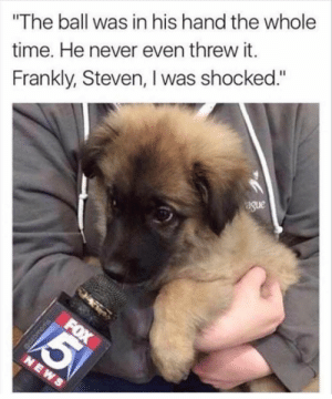 "Animals, Dogs, and Memes: The ball was in his hand the whole  time. He never even threw it.  Frankly, Steven, I was shocked.""  ague Dog Memes Of The Day 32 Pics – Ep38 #dogs #dogmemes #lovelyanimalsworld - Lovely Animals World"