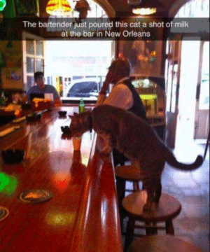 Funny, New Orleans, and Cat: The bartender just poured this cat a shot of milk  at the bar in New Orleans meowch! via /r/funny https://ift.tt/2zvwRo4