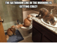 Memes, 🤖, and The Morning: THE BATHROOM LINE  IN THE MORNING IS  GETTING CRAZY