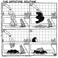 Cats, Memes, and Cartoon: THE BATHTIME ROUTINE.  ーーーーーーーーーーーーー  1.  RF  FACEBOOK. COM/ONTHE PROWL CAT CARTOONS  ーーーー  COCOPYRIGHT ON THE PROUL (RUPERT FANCETT, so The Bathroom Routine... #Cats #Ontheprowl #Rupertfawcett