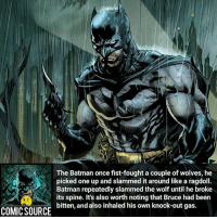 Batman, Disney, and Facts: The Batman once fist-fought a couple of wolves, he  picked one up and slammed it around like a ragdoll.  Batman repeatedly slammed the wolf until he broke  its spine. It's also worth noting that Bruce had been  bitten, and also inhaled his own knock-out gas.  COMICSOURCE They never stood a chance ________________________________________________________ BruceWayne GreenLantern WonderWoman JusticeLeague DC Superman Batman Supergirl DCEU Joker Flash Cyborg DarthVader Aquaman Robin MartianManhunter Deadpool Like Spiderman Rebirth DCRebirth Like4Like Facts Comics BvS StarWars Marvel CW Disney DCComics