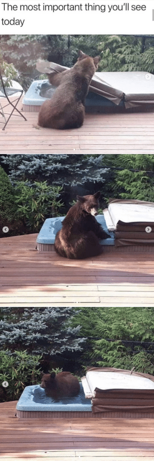 The bear be like 'ohhhhh jacuzzi, I might take a dip' and maybe the owner won't notice i'm just chilling.: The bear be like 'ohhhhh jacuzzi, I might take a dip' and maybe the owner won't notice i'm just chilling.