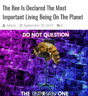 Bees good: The Bee Is Declared The Most  Important Living Being On The Planet  Admin  September 29, 2019  0  DO NOT QUESTION  THE ELEVATED ONE Bees good