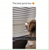 Love it! Credit: @lizzieliz_j: The best good boy e  He literally broke a perfect square in the blinds  so he doesn't miss anything going on outside Love it! Credit: @lizzieliz_j