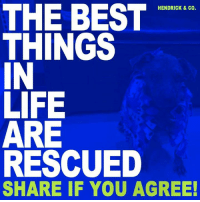 Click, Life, and Memes: THE BEST  HENDRICK & CO.  THINGS  IN  LIFE  ARE  RESCUED  SHARE IF YOU AGREE! I was put on the euthanasia list after being neglected and abused... I have no chance...  CLICK TO READ MY STORY ➡ http://dogco.org/save-dottie-rdr
