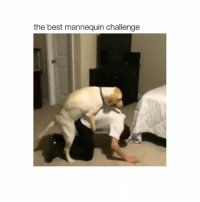 OHMYGOD follow me (@hoebomb) for more videos 😂💟: the best mannequin challenge OHMYGOD follow me (@hoebomb) for more videos 😂💟