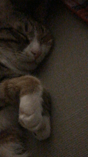 The best paws EVER!!: The best paws EVER!!