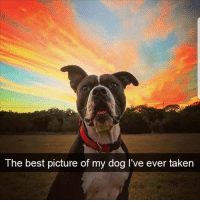Follow @pettylivesmatter for the funniest memes 😂: The best picture of my dog I've ever taken Follow @pettylivesmatter for the funniest memes 😂