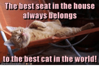 The best seat in the house always belongs  to the best cat in the world! http://cheezburger.com/9032915200: The best seat in the house  always elongs  to the best cat in the world The best seat in the house always belongs  to the best cat in the world! http://cheezburger.com/9032915200