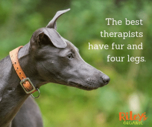Memes, Best, and 🤖: The best  therapists  have fur and  four legs.  Rileys  ORGANIC 🥰🥰