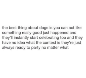 Dogs, Memes, and Party: the best thing about dogs is you can act like  something really good just happened an  they'll instantly start celebrating too and they  have no idea what the context is they're just  always ready to party no matter what DV6