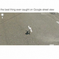 Memes, Street View, and 🤖: the best thing ever caught on Google street view  @asleepinthemuseum  Repon aprobarm oh hai there rp @asleepinthemuseum 👈 all time favorite!