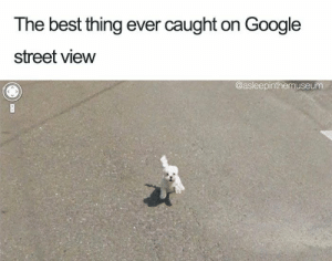 Animals, Funny, and Google: The best thing ever caught on Google  street view  @asleepinthemuseunm 33 Happiest Dog Memes Ever That Will Make You Smile From Ear To Ear #dogmemesfunny #dogmemes #dog #memesdaily #memes #funny #funnymemes #lovelyanimalsworld - Lovely Animals World