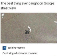 "Google, Memes, and Best: The best thing ever caught on Google  street view  positive-memes  Capturing wholesome moment <p>Wholesome doggo via /r/wholesomememes <a href=""http://ift.tt/2iuszoY"">http://ift.tt/2iuszoY</a></p>"