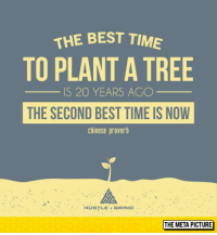 "Tumblr, Best, and Blog: THE BEST TIM  TO PLANT A TREE  S 20 YEARS AGC  THE SECOND BEST TIME IS NOW  chinese proverb  HùSTLE + GRIND..  THE META PICTURE <p><a href=""https://epicjohndoe.tumblr.com/post/172820819369/best-time-to-plant-a-tree"" class=""tumblr_blog"">epicjohndoe</a>:</p>  <blockquote><p>Best Time To Plant A Tree</p></blockquote>"