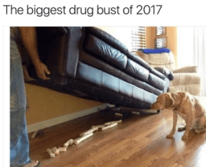 Memes, Animal, and Time: The biggest drug bust of 2017 47 Ridiculous Animal Memes That Will Make You Laugh Every Single Time - I Can Has Cheezburger?