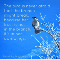 Believe in yourself. You have made it through everything that has happened in your life so far, so odds are you'll make it through this phase of your life as well. Your track record is 100%.: The bird is never afraid  that the branch  might break  because her  trust is not  in the branch,  it's in her  Own Wings.  Faithfully Religionless Believe in yourself. You have made it through everything that has happened in your life so far, so odds are you'll make it through this phase of your life as well. Your track record is 100%.