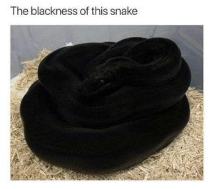 Intriguing: The blackness of this snake Intriguing