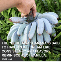 "(via @facts) Give a double-tap if you'd try this! 🍌🍦😋 facts bananas icecream yum: THE ""BLUE JAVA BANANAIS SAID  TO HAVE ANICE CREAM LIKE  CONSISTENCY AND FLAVOR  REMINISCENT OF VANILLA  @FACTSI by guff (via @facts) Give a double-tap if you'd try this! 🍌🍦😋 facts bananas icecream yum"