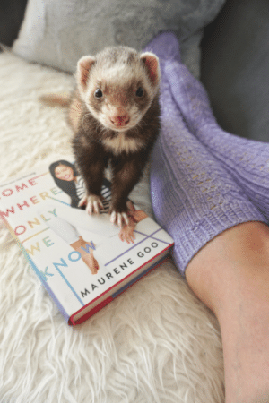 the-book-ferret:  This book. I like it!: the-book-ferret:  This book. I like it!