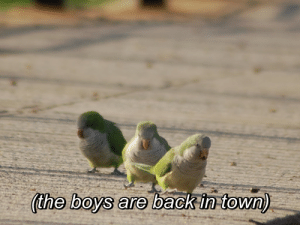 The Boys Are Back in Town, Back, and Boys: (the boys are back in town)