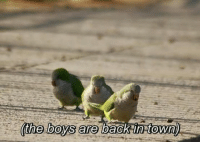 Boys, Towns, and Town: (the boys are  l  aCk In town  2