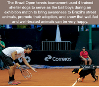 Memes, Brazil, and Match: The Brazil Open tennis tournament used 4 trained  shelter dogs to serve as the ball boys an  exhibition match to bring awareness to Brazil's street  animals, promote their adoption, and show that well-fed  and well-treated animals can be very happy  Correos  IVO