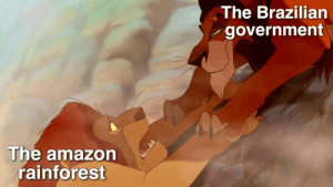 More of the best memes at http://mountainmemes.tumblr.com: The Brazilian  government  The amazon  rainforest More of the best memes at http://mountainmemes.tumblr.com