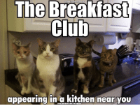 You get the previews at 4am!: The Breakfast  Club  appearing in a kitchen near you You get the previews at 4am!