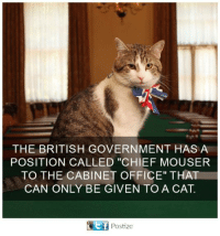 """Governmentally: THE BRITISH GOVERNMENT HAS A  POSITION CALLED """"CHIEF MOUSER  TO THE CABINET OFFICE"""" THAT  CAN ONLY BE GIVEN TO A CAT.  Postize"""