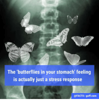 what causes butterflies when you like someone