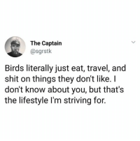 Fucking, Funny, and Shit: The Captain  @sgrstk  Birds literally just eat, travel, and  shit on things they don't like. I  don't know about you, but that's  the lifestyle l'm striving for. I wish u was a bird. Birds fucking rock. (@sgrstk)
