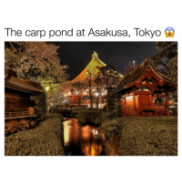Flying my Valentine out to @tokyo asap!! 😍: The carp pond at Asakusa, Tokyo Flying my Valentine out to @tokyo asap!! 😍