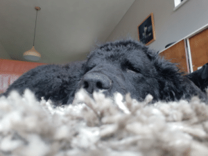 The carpet's view of my dog sleeping: The carpet's view of my dog sleeping