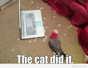 Funny parrot blaming the cat: The cat did it  LeFunny.net Funny parrot blaming the cat