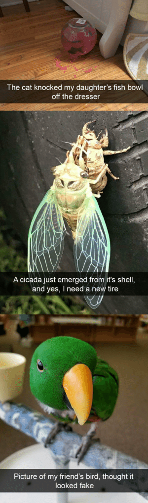 animalsnaps:Animal snaps: The cat knocked my daughter's fish bowl  off the dresser   A cicada just emerged from it's shell  and yes, I need a new tire   Picture of my friend's bird, thought it  looked fake animalsnaps:Animal snaps