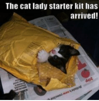 Cats, Taxes, and Free: The cat lady starter kit has  arrived! Tax Free!