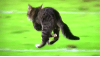 The cat that ran onto the field during TNF just racked up more yards than the Dolphins https://t.co/4wgQMVkrHz: The cat that ran onto the field during TNF just racked up more yards than the Dolphins https://t.co/4wgQMVkrHz