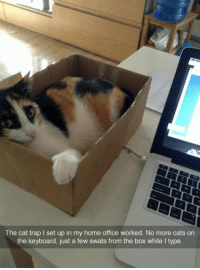 <p>The Cat Trap Worked.</p>: The cat trap I set up in my home office worked. No more cats on  the keyboard, just a few swats from the box while I type <p>The Cat Trap Worked.</p>