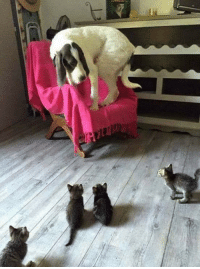 Cats, Gang, and Hand: The cats are taking over.