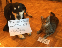Happy Great Books Week!: The cat's fave  book? To kill  Mockingbird.  To Manual, Happy Great Books Week!